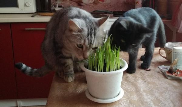 обучение поедания травы