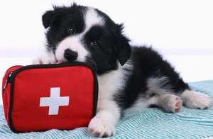 главная щенок ветеринар