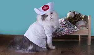 кошка медсестра